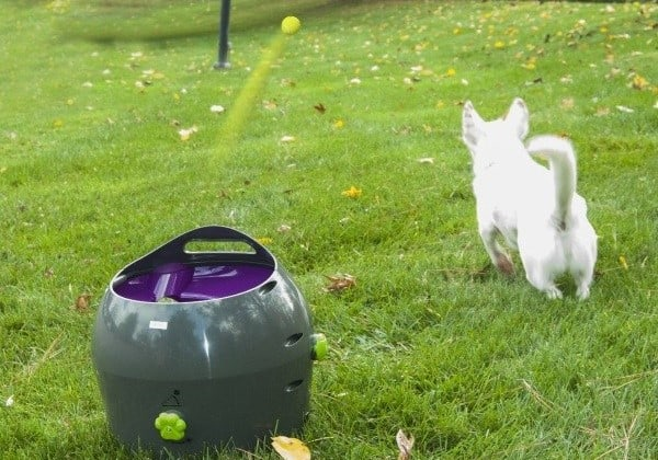 Post image for PetSafe Automatic Ball Launcher